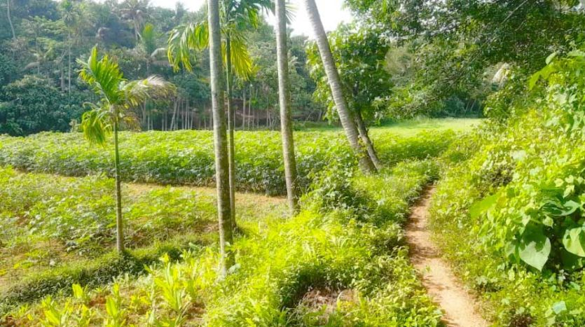 low budget 1 acre agricultural land for sale near