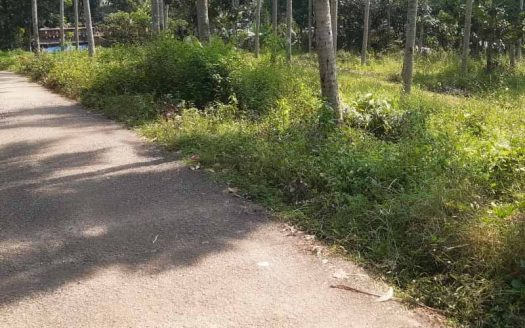 7 acre Rubber plantation for sale in Tholicode, Nedumangad